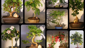 Real Estate Client Client Bonsai Gifts_