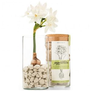 Paperwhites Realtor Housewarming Holiday Gift