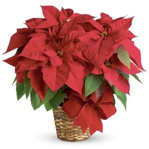 Red Poinsettia Realtor Holiday Housewarming Gift